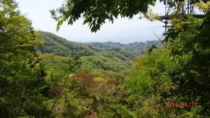真ん中あたりに写っている森が霊園となる場所です。