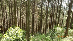 森は,このような雑木林であり,多様な植生が見られます。